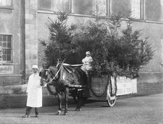 We're back again with William Power Seed Merchants of O'Connell Street, Waterford,  Date: 16 December 1929