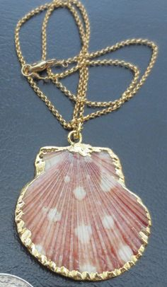 Real sea shell flat necklace trimmed in gold by PanachebyAmanda, $35.20