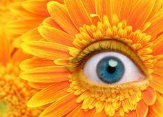 eye daisy, posted by eyemakeart.wordpress.com