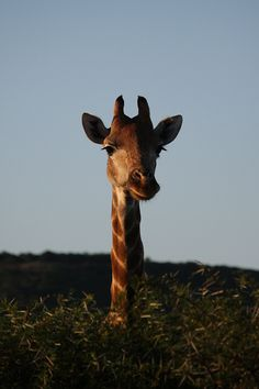 Brilliant Safari experience and pictures by @Christina Childress Childress & Norris.