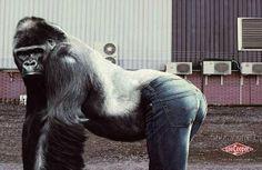 Найти идеальные джинсы - бесценно!