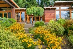 Contemporary Exterior of Home with exterior stone floors, Pathway, African Daisy Seeds - Yellow