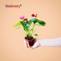 Anthurium Purple....💜 Buy Indoor Plants, Outdoor Plants, Vegetative Reproduction, Online Plant Nursery, Natural Air Purifier, Buy Plants Online, Brown Flowers, Organic Soil, Hardy Plants