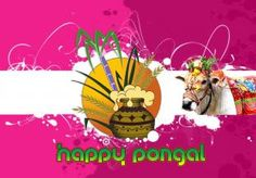 happy pongal festival gallery