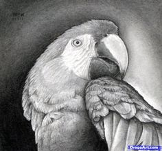 How to draw a realistic parrot, scarlet macaw -  Hundreds of drawing tuts on this site