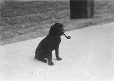 pipe / dog