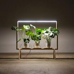 Johan Kauppi lance un cadre lumineux pour les plan - Jardin Vertical Fachada Green Furniture, Solid Wood Furniture, Furniture Design, Indoor Garden, Indoor Plants, Room Acoustics, Green Windows, Pot Jardin, Leafy Plants