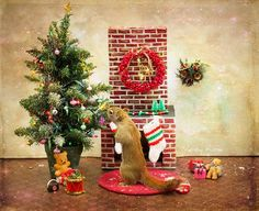 """Canadian photographer Nancy Rose had noticed that the squirrels in her backyard were particularly tame, so she decided to create a series called """"Mr. Peanuts"""" b Christmas Squirrel, Christmas Animals, Christmas Pets, Christmas Makes, Christmas Time, Merry Christmas, Cute Squirrel, Squirrels, Old Fashioned Christmas"""