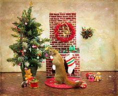 cute-squirrel-nancy-rose-11