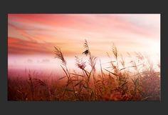 Toile imprimée 'Paysages : coucher de soleil dans lacampagne'