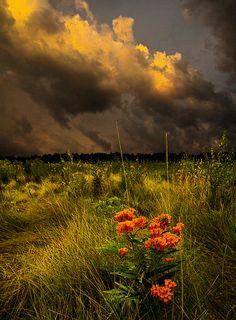 Warmth | Flickr - Photo Sharing!
