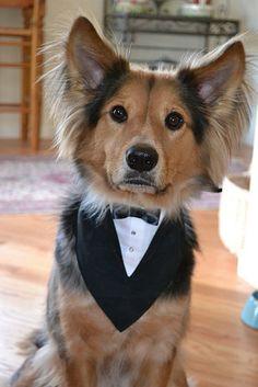 Small Tuxedo Pet Bandana by WoofCreations on Etsy