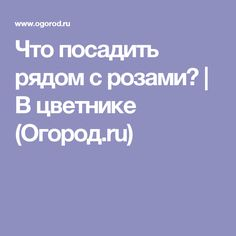 Что посадить рядом с розами? | В цветнике (Огород.ru)