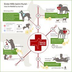 Infografik: Erste Hilfe beim Hund