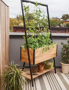 Self-watering elevated cedar planter box with trellis and shelf with vining plants in a blacony garden