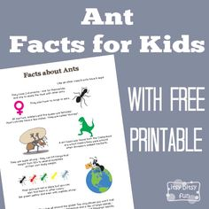 FREE-Ant Facts for Kids...time to look into one of the members of the insect family - ants. These are super fun for preschoolers, kindergarten and older kids!