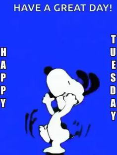 Tuesday Quotes Funny, Tuesday Quotes Good Morning, Good Night Love Quotes, Tuesday Humor, Good Morning Gif, Funny Quotes, Snoopy Happy Dance, Snoopy Love, Snoopy And Woodstock