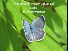 *▶ Filmpje over vlinders