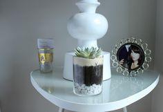 http://i2.wp.com/www.thesparkle.net/wp-content/uploads/2013/05/succulents-3-edit.jpg