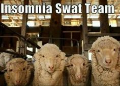 the insomnia swat team (lol) You Funny, Funny Jokes, Hilarious, Funny Stuff, Seriously Funny, Animal Pictures, Funny Pictures, Funny Pics, Messages