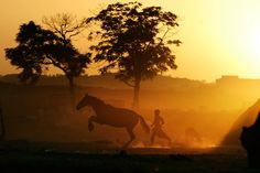 A Pakistani youth runs after his horse along a field as the sun sets on the outskirts of Islamabad, Pakistan, Friday, May (AP Photo/Muhammed Muheisen) Today Pictures, Pictures Of The Week, Beautiful World, Beautiful Images, Puerto Rico, Shark Photos, Photos Voyages, German Shepherd Puppies, Photojournalism