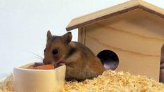 Wenn Sie handwerklich begabt sind, können Sie das Hamsterhaus auch durch ein schickes Schrägdach aufwerten (Quelle: imago/Redeleit)