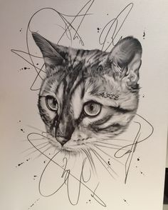 Bengal cat pencil drawing