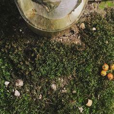 "7 Likes, 1 Comments - Bereza lamp (@berezalamp) on Instagram: ""Настольная лампа, полированная латунь. Table lamp, polished brass finish. #светильник #настольнаялампа #береза #латунь #декор #birch…"""