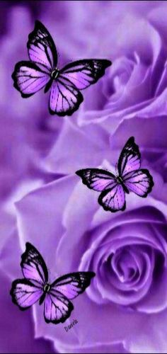 Wallpaper Backgrounds, Wallpapers, Butterflies, Board, Pictures, Leaves, Photos, Wallpaper, Butterfly