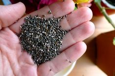 3 MUST-HAVE SEEDS To Store For Emergencies (Off Grid News) | Chia, Flax & Hemp | #preparedness #seeds #hemp