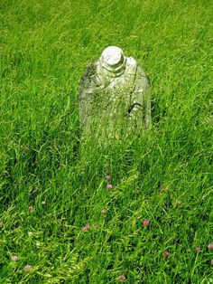 Albany Rural Cemetery - An Exploration of History: At Rest In The Clover