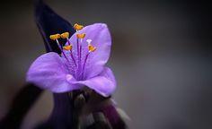 Hope .. by Christos Kyriazis - Photo 128826485 - 500px
