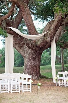 Fabric draped over a tree to frame the wedding ceremony. by shelia