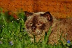 Relaxed cat | Puzzle Games Free Online Jigsaw Puzzles, Puzzle Games, Wallpaper, Cats, Animals, Gatos, Animales, Animaux, Wallpapers