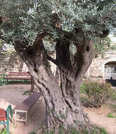Underneath one of these trees, Jesus was dealt the first blow of Calvary - betrayal. Has someone betrayed you? That was only the first thing that Jesus suffered on the road to Calvary. There was not a moment of separation between Submission and Suffering.