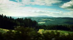 Landscapes nature trees wood (2560x1440, nature, trees, wood)  via www.allwallpaper.in