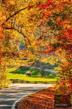 Autumn Leaves On The North Carolina Back Roads by John Rogers