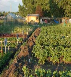 The benefits of adding compost to your soil Watch News, Calgary, Compost, Vineyard, 21st, Gardening, Outdoor, Outdoors, Vine Yard