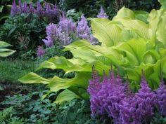 "Gardening Tips - Astilbe with Hosta ""Sun Power"". Shady area around the back."