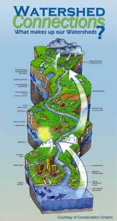 Ontario's Watershed Connections helps explain what a watershed is. Rossie - a diagram on the cycle of watershed and can be helpful when learning about water in the future Earth Science, Science And Nature, Watershed Management, Teaching Geography, Geography Worksheets, Physical Geography, 7th Grade Science, Water Pollution, Water Management