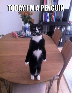 Kat is pinguin, ok?