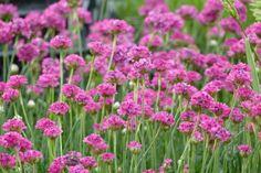 7 vivaces à feuillage persistant à avoir au jardin - Promesse de Fleurs Plants, Garden, Outdoor