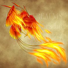 Endless Realms bestiary - Phoenix by jocarra on DeviantArt Phoenix Art, Phoenix Wings, Phoenix Rising, Fantasy Creatures, Mythical Creatures, Mythical Birds, Fire Tattoo, Fantasy Beasts, Wood Carving Patterns