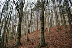 Trunks, Plants, Photography, Drift Wood, Flora, Plant, Photograph, Fotografie, Planting