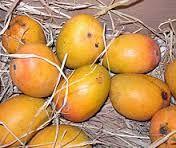 Annapurna: Mango recipes |Easy indian aam kairi marathi recip...