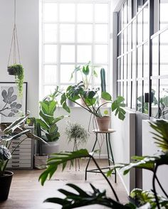 "Urban Jungle Bloggers on Instagram: ""Back to work after the extended weekend! We wish our studio looked like this  #plantgoals  :@gyrithelemche for @greenifydk #urbanjunglebloggers"""
