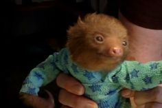 Baby sloth in a onesie.