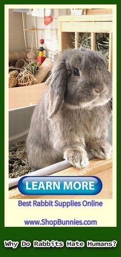 rabbit cute    rabbit cartoon    rabbit pets    rabbit anatomy    peter rabbit    rex rabbit    rabbit videos    rabbit decor    rabbit jumping Rabbit Gif, Cartoon Rabbit, Rex Rabbit, House Rabbit, Rabbit Toys, Peter Rabbit, Rabbit Anatomy, Rabbit Facts, Rabbit Jumping