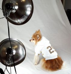 Behind the Scenes: Touch of Europe Dog Clothing Photo Shoot. Doggie clothing and accessories coming soon!