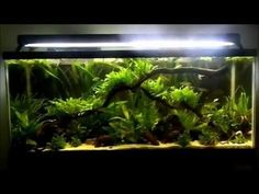 Finally adding some stuff to the 55 gallon tank which I was neglecting for the longest time. I added more Java fern and some rocks and driftwood to make it m. Nature Aquarium, Planted Aquarium, 55 Gallon Tank, Fish Tanks, Aquascaping, Freshwater Aquarium, Fresh Water, Amazing, Youtube